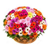 Flower Delivery in India - Mix Gerbera Basket