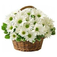 Send Flowers to India. Basket of 20 White Gerbera in India